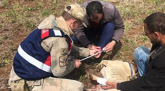 Yaralı Köpeğe İlk Yardım Jandarma'dan