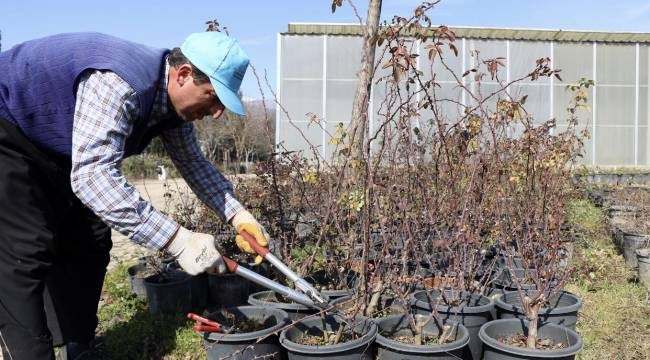 Büyükşehir Serası İlkbahara Hazırlanıyor