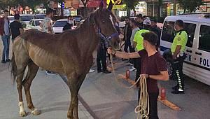 Kahramanmaraş'ta trafiği tehlikeye sokan atı polis yakaladı