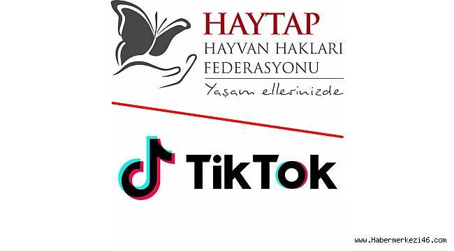 TikTok hayvanlara şiddete karşı HAYTAP ile el ele veriyor
