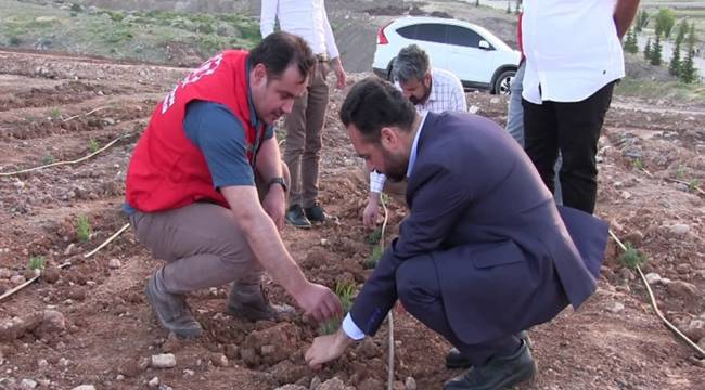 Türkiye'nin en büyük lavanta vadisini Elbistan 'da kurmaya çalışıyoruz