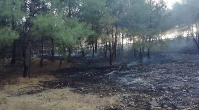 Kahramanmaraş'ta anız yakılması sonucu alevler ormana sıçradı
