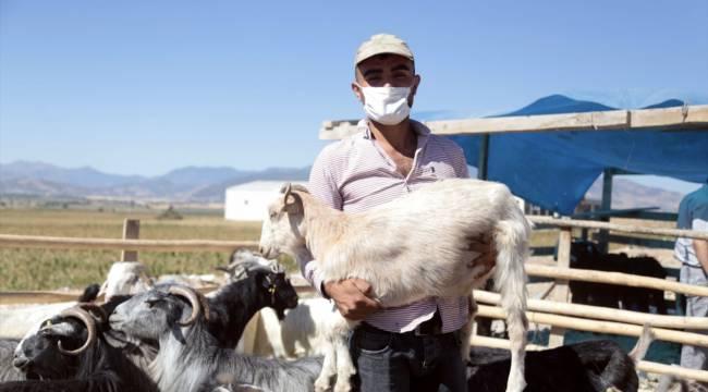 Kahramanmaraş'ta hayvan pazarında yoğunluk