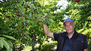 Kahramanmaraş'ta kiraz hasadı başladı