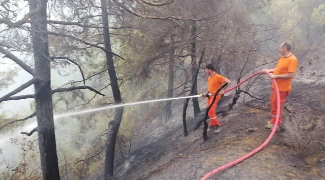 Kahramanmaraş'taki orman yangınında bir hektarlık alan zarar gördü